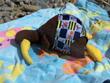Sunbathing Kiwi 1