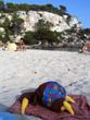 Sunbathing Kiwi 2